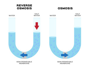 osmosis and reverse osmosis infographic vector