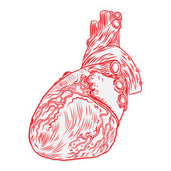 Heart hand drawn isolated on a white background. Hand drawn anatomical flesh tattoo human heart with detailed veins. Vector.