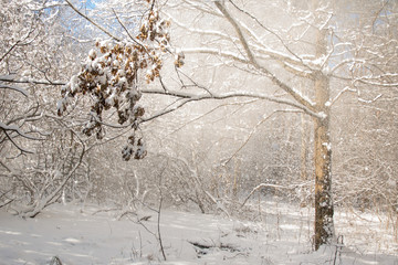 fantastically beautiful snow-white winter forest
