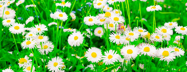 Colorful Wide Screen Nature Spring Background