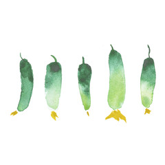 Watercolor cucumbers painting art, vegetable restaurant banner background with natural watercolor splash textures.