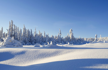 Norefjell / Norway: Beautiful winter landscape at the edge of a cross-country ski trail