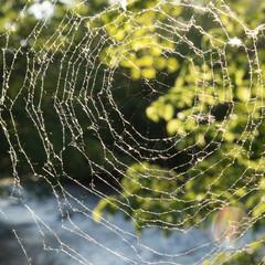 Circular Spider web