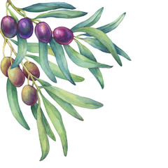 An olive branch with ripe fruit and leaves. Realistic illustration of black and green olives. Watercolor hand drawn painting illustration isolated on a white background.