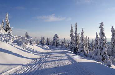 Norefjell / Norway: Perfect conditions for cross-country skiing
