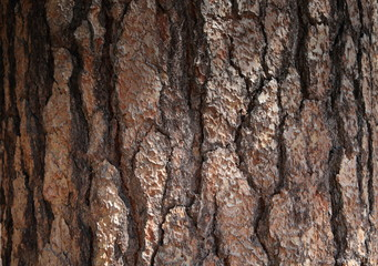 Alte spröde hölzerne Baumrinde. Natürliche Beschaffenheit der Rinde die rau und rissig ist wie haut. braunes Hintergrund Muster. braune Holzstruktur Nahaufnahme