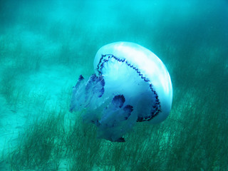 Jellyfish under blue water in the sea in Greece