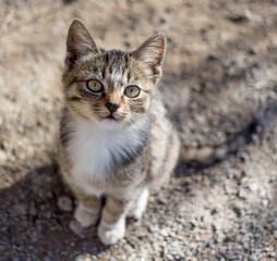 Cute kitten sits on the ground and looks up directly to watcher. Small depth of field on the photo. Cats, the favourite pets.