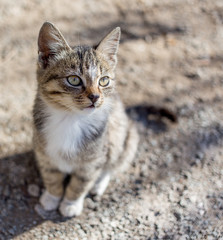 Cute kitten sits on the ground and looks sideways. Small depth of field on the photo. Cats, the favourite pets.