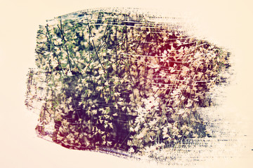 dreamy and abstract image of white flowers. double exposure effect with watercolor brush stroke texture.