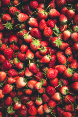 Strawberry, keep strawberries fresh from the farm.