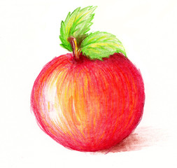 Drawing of apple. Watercolor and pencil art.