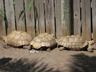 Drei Schildkröten