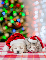 Sleeping bichon frise puppy and cat in red santa hats on a background of the Christmas tree. Space for text
