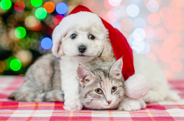 bichon frise puppy in red santa hat embracing a cat on a background of the Christmas tree