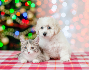 bichon frise puppy and cat on a background of the Christmas tree