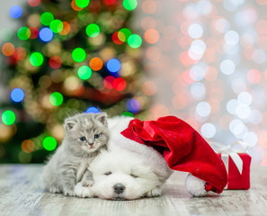 Baby kitten and samoyed puppy in red santa hat with gift box on a background of the Christmas tree