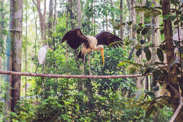 Wildlife and rainforest exotic tropical birds in a bird park
