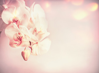 Wall Mural - Beauty orchids flowers at pink pale background with bokeh