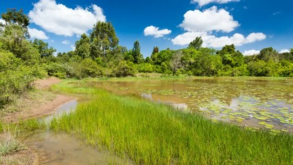 Wall Mural - Timelapse sequence of the beautiful Lily Lake in Karura Forest, Nairobi, Kenya with blue sky. 4K video zooming in.