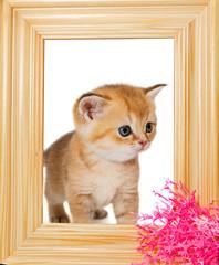 Little kitten in wooden photo frame