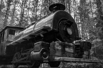 Black and white photo of an antique steam locomotive abandoned in the forest.