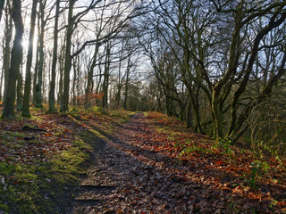 Muddy woodland footpath