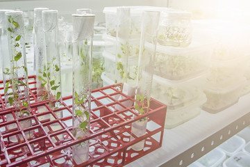 research sprouts in the laboratory