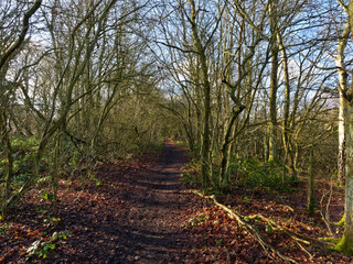 Muddy woodland path