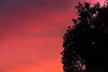 A beautiful pink and orange coloured sunset with the silhouette of a tree