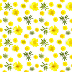 Fototapete - Abstract floral background. Seamless pattern from plants, wild flowers, isolated on white background, flat lay, top view. The concept of summer, spring, Mother's Day, March 8.