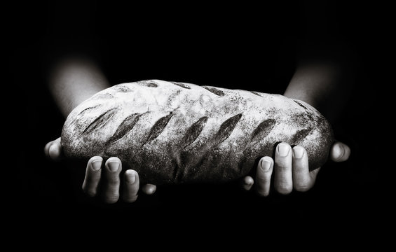 A loaf of freshly baked bread in the hands of a baker on a black background.