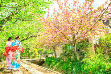 Two asian women in kimono take picture of cherry blossom trees along Philosopher's walk during Sakura, sping season. The Path is a famous pedestrian path in Higashiyama district, Kyoto, Japan.