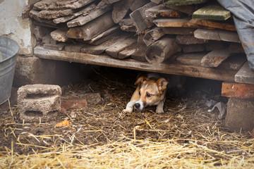 Unhappy homeless dog