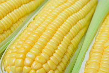 fresh peeled sweet corns - closeup
