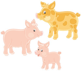 Small pink piglet, funny pig and hog