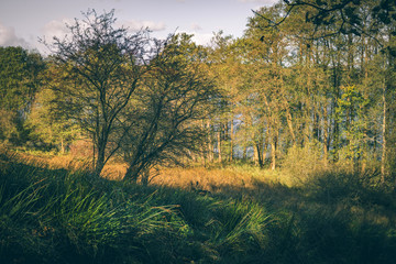 Deer walking in some tall grass in the autumn sun