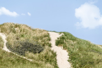 Danish coast landscape with dunes