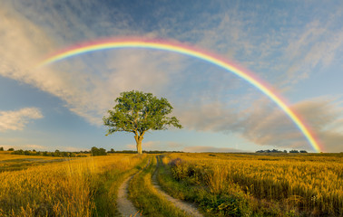 Wall Murals Beige rural landscape ,rainbow,road and tree