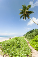 Balapitiya Beach, Sri Lanka - On the path to the beautiful beach of Balapitiya