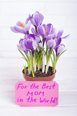 Crocus in pot and greeting card