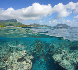 Over and under sea surface, school of fish with a shark underwater and wave breaking on the reef, Huahine island, Pacific ocean, French Polynesia