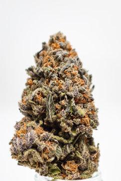 Cannabis Flower Macro - Strain: Purple Kool Aid