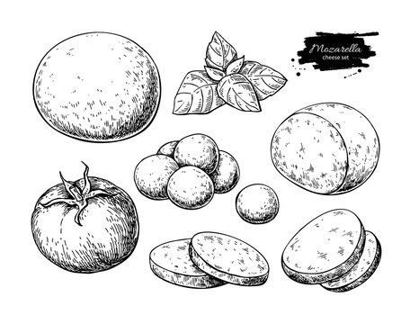 Mozzarella cheese vector drawing. Hand drawn round piece with baby mozzarella