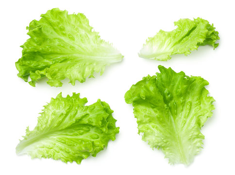 Lettuce Salad Leaves Isolated on White Background