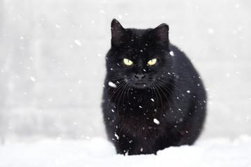 black cat and snow, snowfall