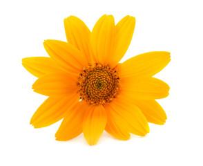 marigold flowers isolated on white background ( calendula flower ) macro