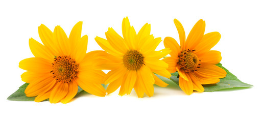 marigold flowers with green leaf isolated on white background ( calendula flower )