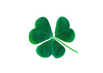 St. Patrick's Day symbol. Lucky shamrock