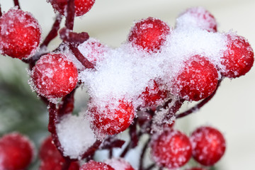 Christmas red berries in winter snow
